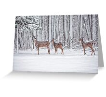 Winter Visit Greeting Card