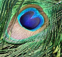 Peacock Feather Eye by Havocgirl