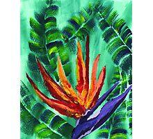 Bird of Paradise Crane Flower Acrylic Painting Photographic Print