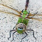 Common Green Darner (iPad Cases) by April Koehler