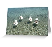 Lipsi Greek Island geese Greeting Card