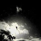 Sun Spider #2 by David Bath