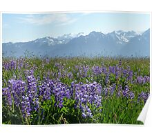 Olympic Mountains Poster