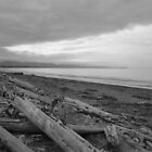 Dungeness Spit WA by WhiteDiamond
