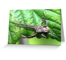 Running Crab Spider  Greeting Card