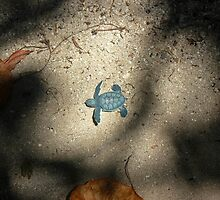 Adventure Turtle by Dave Austin