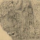 Wisent II (European Bison) by A V S TURNER