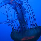 Jellyfish by lindsycarranza