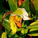 Orchid 11 by Joy Fitzhorn