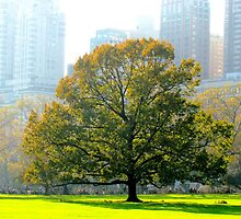 A tree grows in New York City  by Alberto  DeJesus