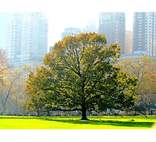 A tree grows in New York City  Photographic Print