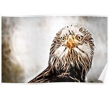 Wild nature - eagle #3 Poster