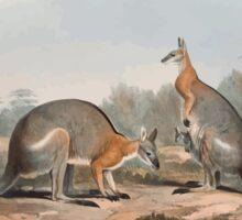 A monograph of the Macropodidæ or family of kangaroos John Gould 1842 008 Halmatrus Dorsalis Sticker