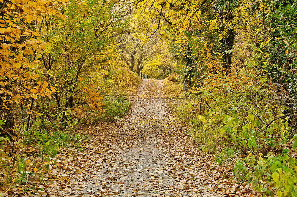 Road To Paradise by PKGPhotography