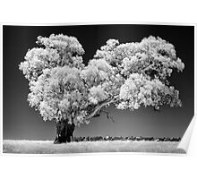 Infrared tree - front view Poster