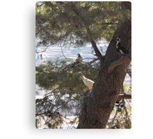 Greek Islands Pigeons Canvas Print