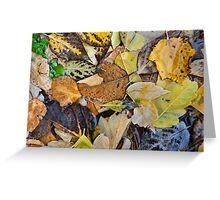 Leaves in Josie's Pond Greeting Card