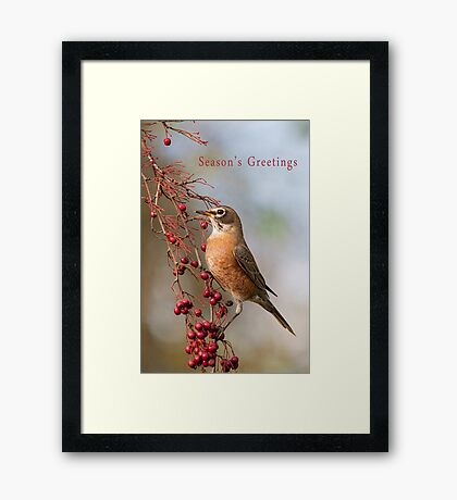 Robin and Red Berries Framed Print