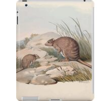 A monograph of the Macropodidæ or family of kangaroos John Gould 1842 030 Bettoncia Fasclata iPad Case/Skin