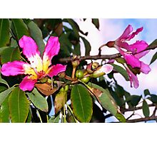 Blissfully pink blossoms Photographic Print