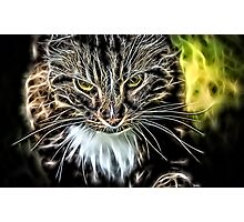 Wild nature - cat #6 Photographic Print