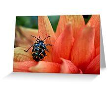 Fashion-conscious bug Greeting Card