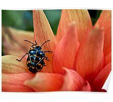 Fashion-conscious bug Poster