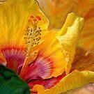 Hibiscus Art by Kathy Nairn