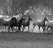 Gauchos on the move by Maggie Hegarty