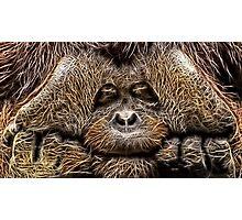 Wild nature - chimp Photographic Print