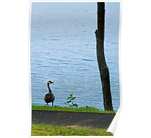 One Goose, One Sapling, One Tree Poster