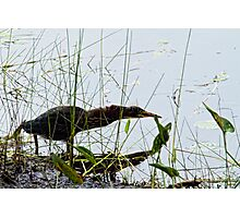If I was a Heron I'd Hate to Get Whipash Photographic Print