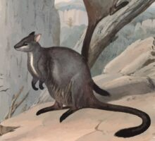 A monograph of the Macropodidæ or family of kangaroos John Gould 1842 023 Petrogale Penicillata Sticker