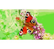 Wild nature - butterfly #2 Photographic Print