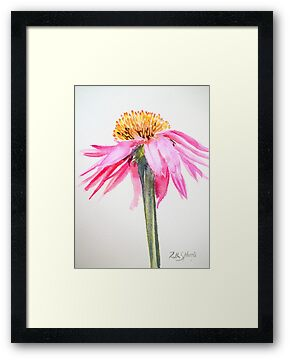 Coneflower by Ruth S Harris
