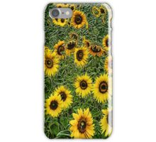 sunflowers . . . good morning! iPhone Case/Skin
