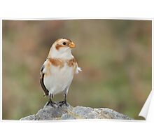 Happy Snow Bunting. Poster