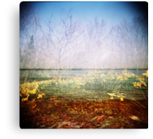 Holga sea of daffodils Canvas Print