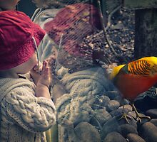 The Innocent Child Watches the Bird by Handy Andy Pandy