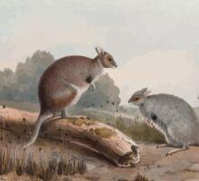 A monograph of the Macropodidæ or family of kangaroos John Gould 1842 012 Lagorchestes Lepoides Sticker