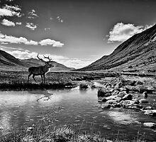 A lone stag by Sam Smith
