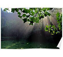 Morning, Wulingyuan National Park, Hunan Poster