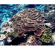 Coral Garden - Lady Elliot Island Photographic Print