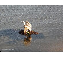 Pelican Time Photographic Print