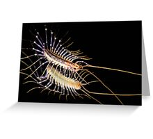 Centipede 2 Greeting Card