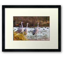 Sandhill Cranes on Watch Framed Print