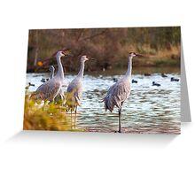 Sandhill Cranes on Watch Greeting Card
