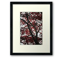 Canopy of Red Framed Print