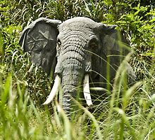 Elephant in the grass by mamasita