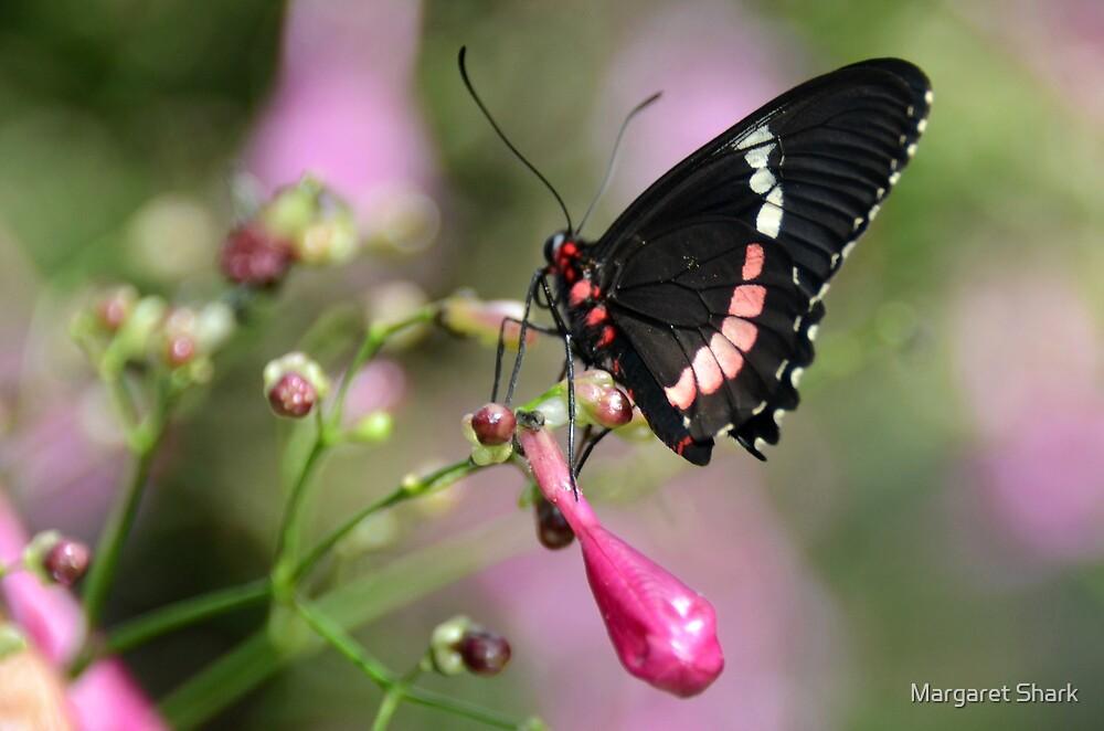 Pink by Margaret  Shark